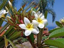 image flora-2-jpg