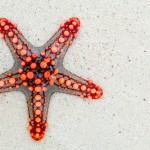 red_starfish_on_beach-wallpaper-1440x900